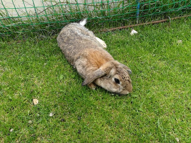 07ウサギ