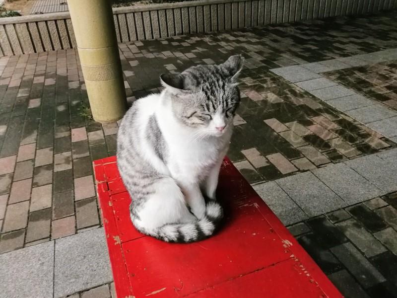 18夜のアーケードの猫