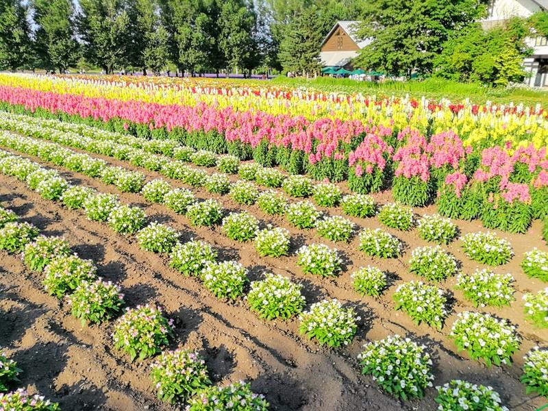14花人の畑