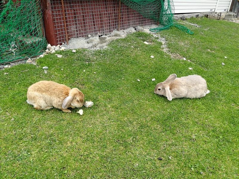 08ウサギ