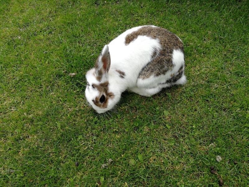 04ウサギ