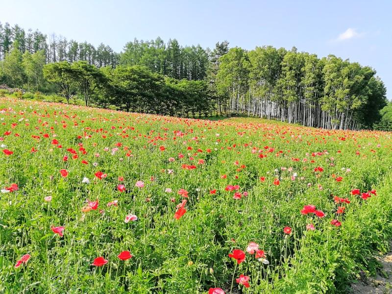 10山の彩りの畑