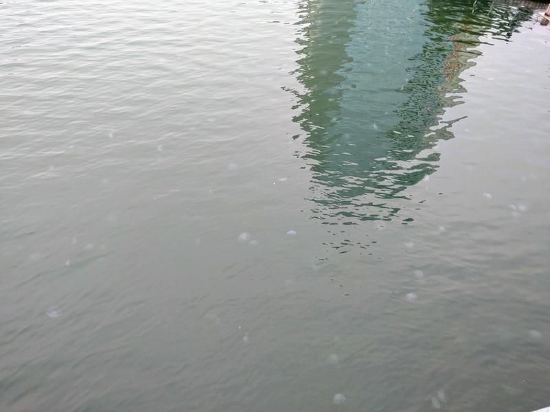 05新町川のクラゲ