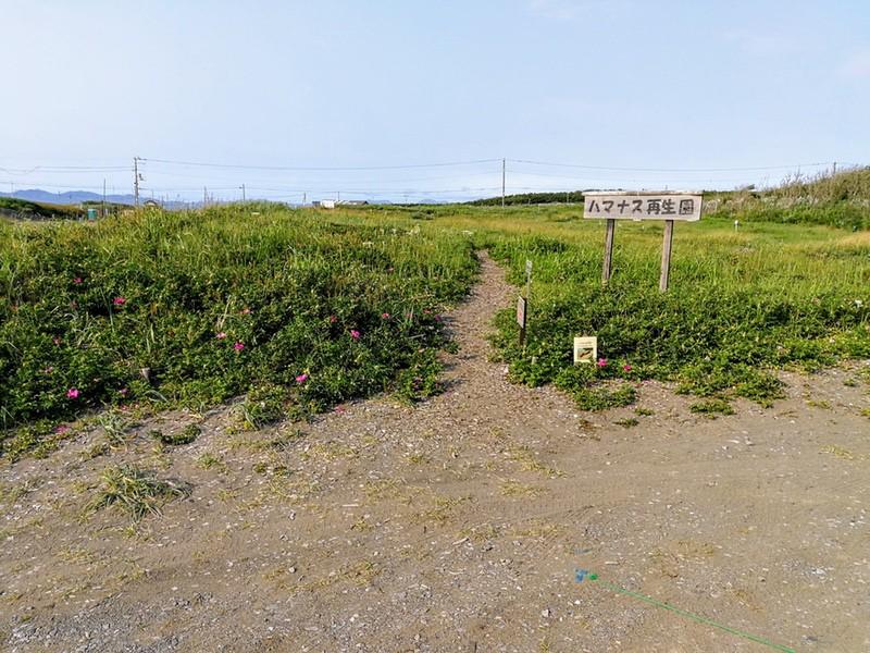 28石狩浜海浜植物保護センター