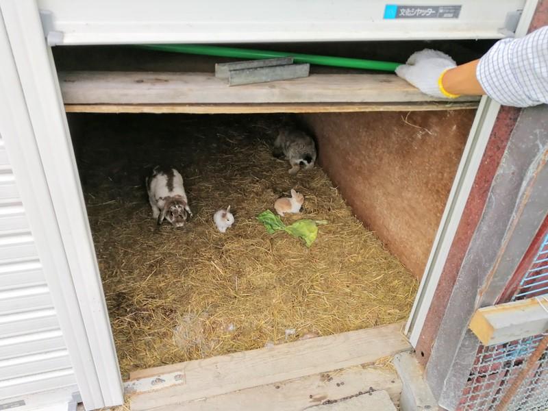 11赤ちゃんウサギ