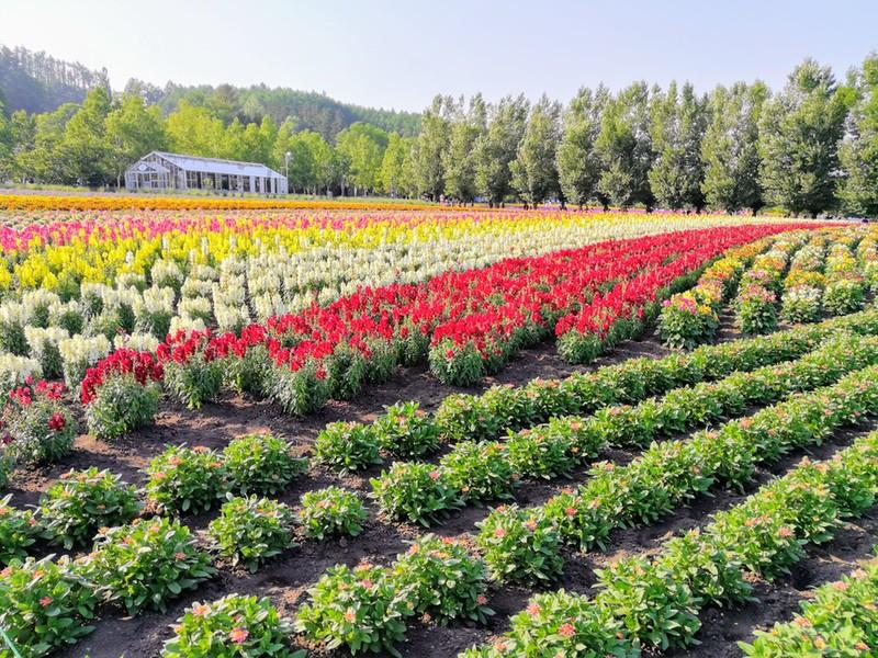 13花人の畑
