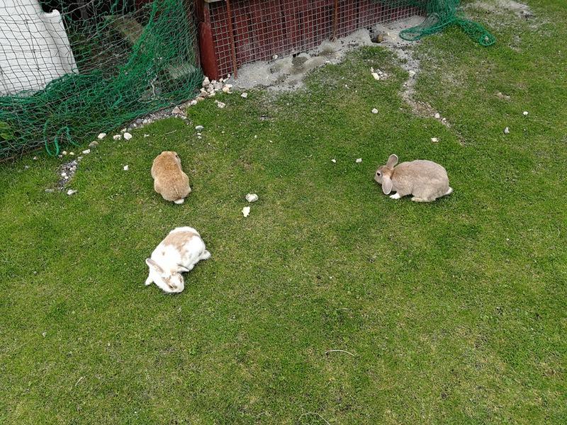 09ウサギ
