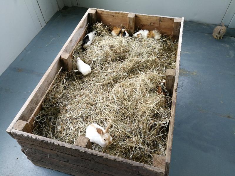 12子ウサギ