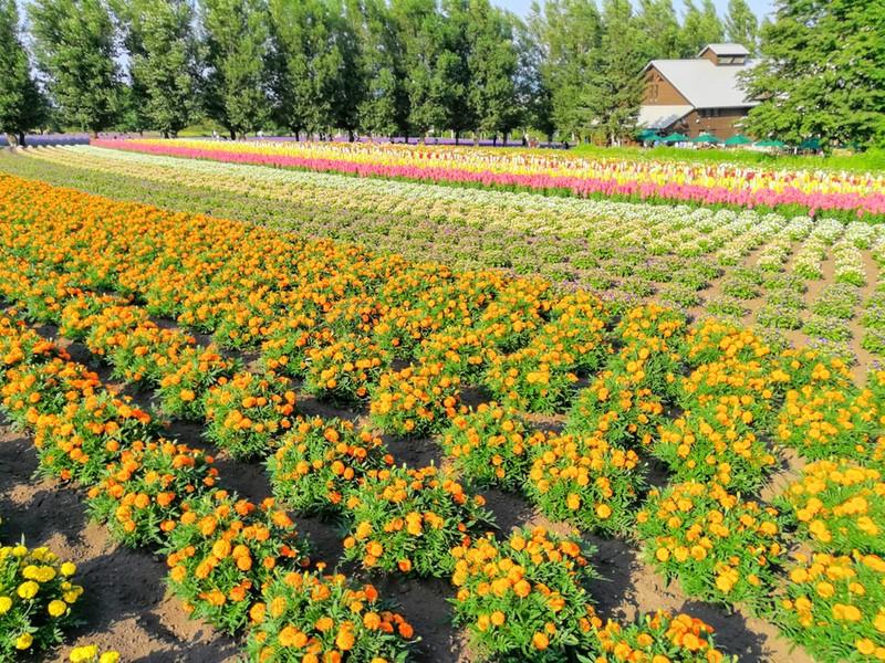 15花人の畑