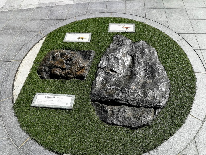 18足跡の化石
